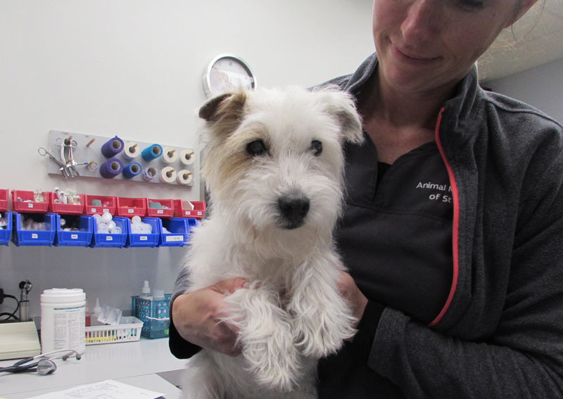 Dog Veterinarian Care in St. Charles